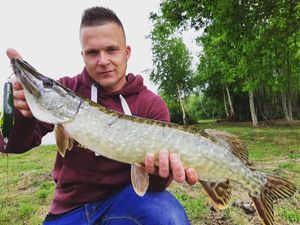Chain Pickerel — William Cozette