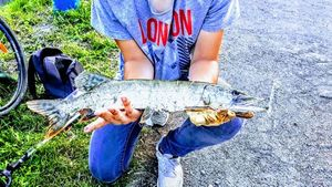 Northern Pike — Matt Hennon