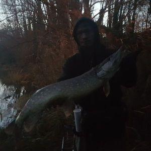 Northern Pike — Peng Defeu