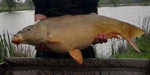 Leather Carp — cool fishing 86