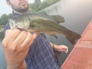 Largemouth Bass — Otter Man