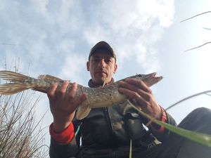Northern Pike — AdelineNicolas Barrey