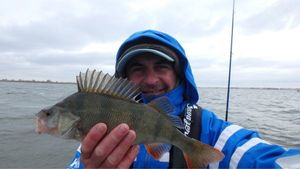 European Perch — Herve Savager's