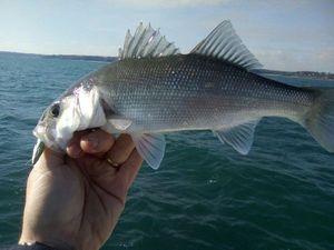 European Bass — Ludo Lozac h