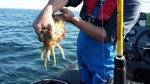 Common Cuttlefish — Johann Leux