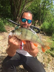 European Perch — Jordan @renofishingco