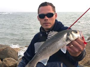 European Bass — barloup fishing