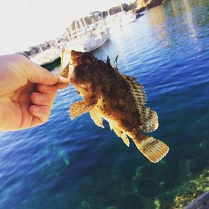 Brown Scorpionfish — Adrien Casagrande