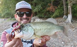 Largemouth Bass — Thomas Moussion