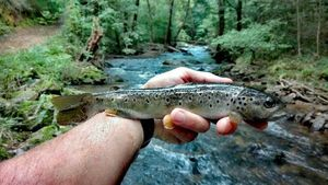 Brown Trout — Xubakal EH