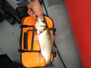 European Bass — Guillaume Chassot