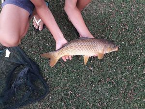 Common Carp — Ewen Mathieu