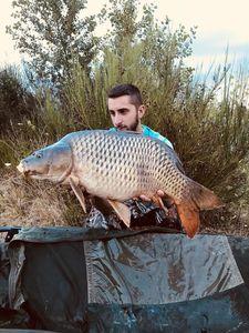 Common Carp — Christopher Arnault