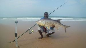 Giant African Threadfin — Glenn-Ferris Tarpon