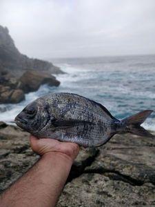 White Seabream — João Sousa