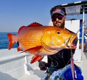 Two-spot Red Snapper — Raphael Du Merilis
