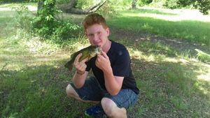 Largemouth Bass — Sparta Fish