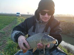 Common Carp — Nicola Visentin