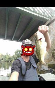 Largemouth Bass — Anthony Gaillard