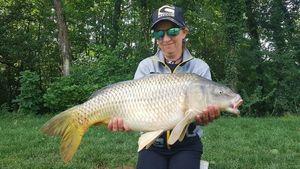 Common Carp — jimmy Maistrello