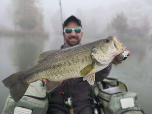 Largemouth Bass — Mathieu Alexandre