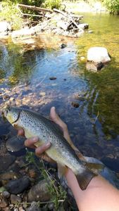 Brown Trout — Esteban Dejoux