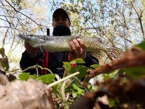 Northern Pike — Mickael Alain