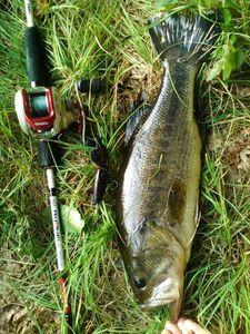 Largemouth Bass — Carna Fisher
