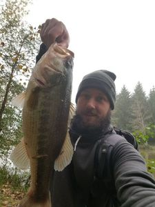 Largemouth Bass — Thibaud Nemoz