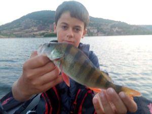 European Perch — Gabin Chazot