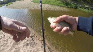 Largemouth Bass — Rod Fishing