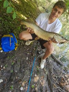 Northern Pike — Pierrot Honore