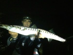 Yellowmouth Barracuda — Andrea Vescovi