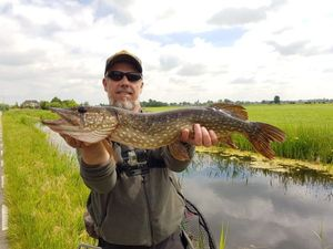 Northern Pike — Alain Laoureux