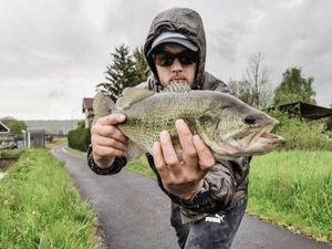 Largemouth Bass — Jordan Monkey Fishing