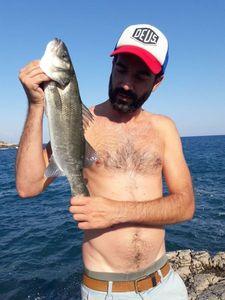 European Bass — Philippe Pmgrafiks