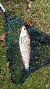 Chub — Thomass Fishing
