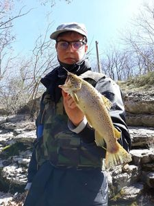 Brown Trout — Matteo Baiocco