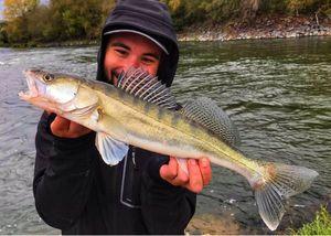Zander — Angler's Madness (Vincent _b)