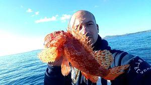 Red Scorpionfish — Sebastien Fisher