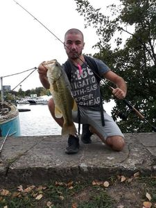 Largemouth Bass — Nathan Platret