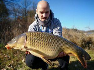 Common Carp — Maxime Hamon-gillet