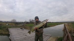 Northern Pike — Thibaut Cchl