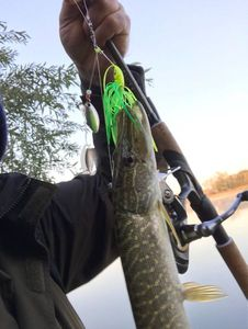 Northern Pike — Guillaume Indre et Loire