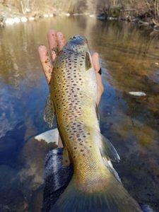 Brown Trout — Fishou / Team QueLeFish sur Youtube