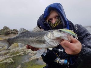 European Bass — Jocelyn Dreneau