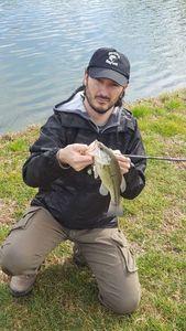 Largemouth Bass — Alessandro Pesci