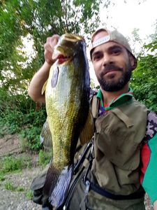 Largemouth Bass — Nelson De Carvalho