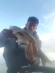 European Bass — Jim Lucas