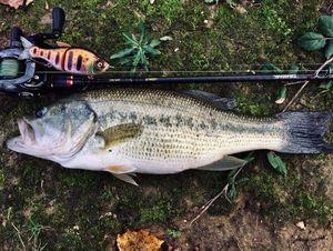 Largemouth Bass — Anthony VORS